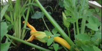 Cours de jardinage