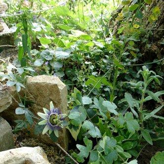 Jardins en pente